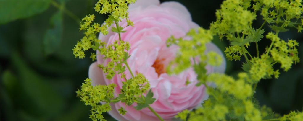 Colourful summer flower combos