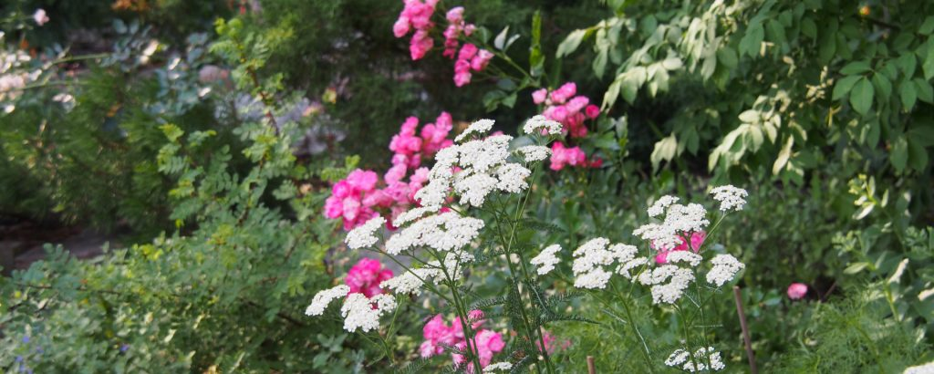 Fertilizing 101, part 1 - Feeding your garden