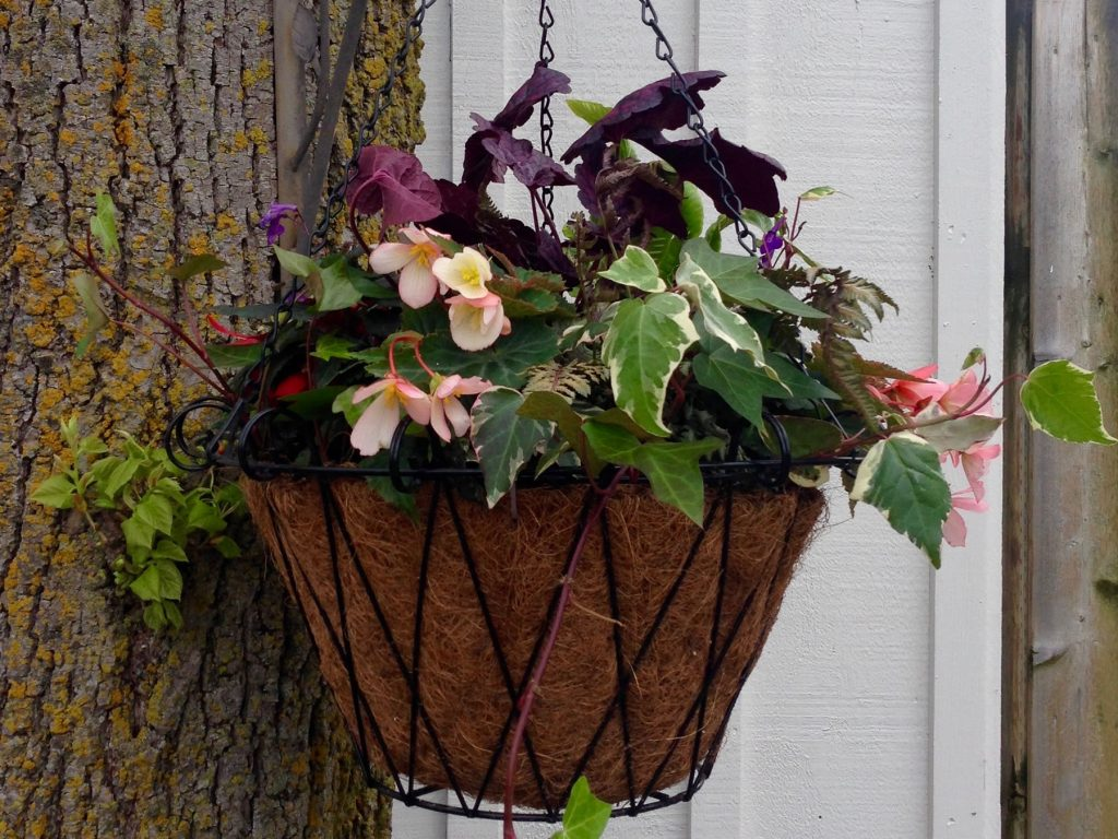 Hanging Basket for shade