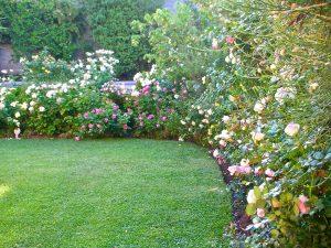 Rose Garden in Santiago Chili