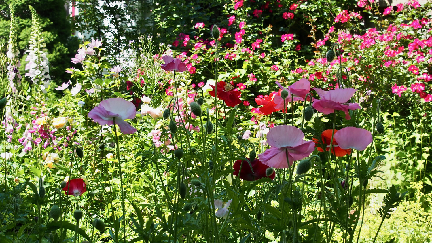 English Cottage Garden in Full Bloom
