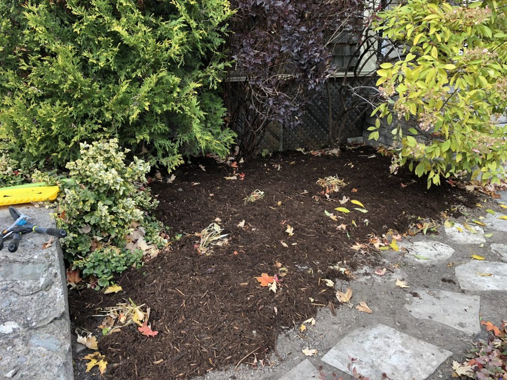 Front Garden Cleanup