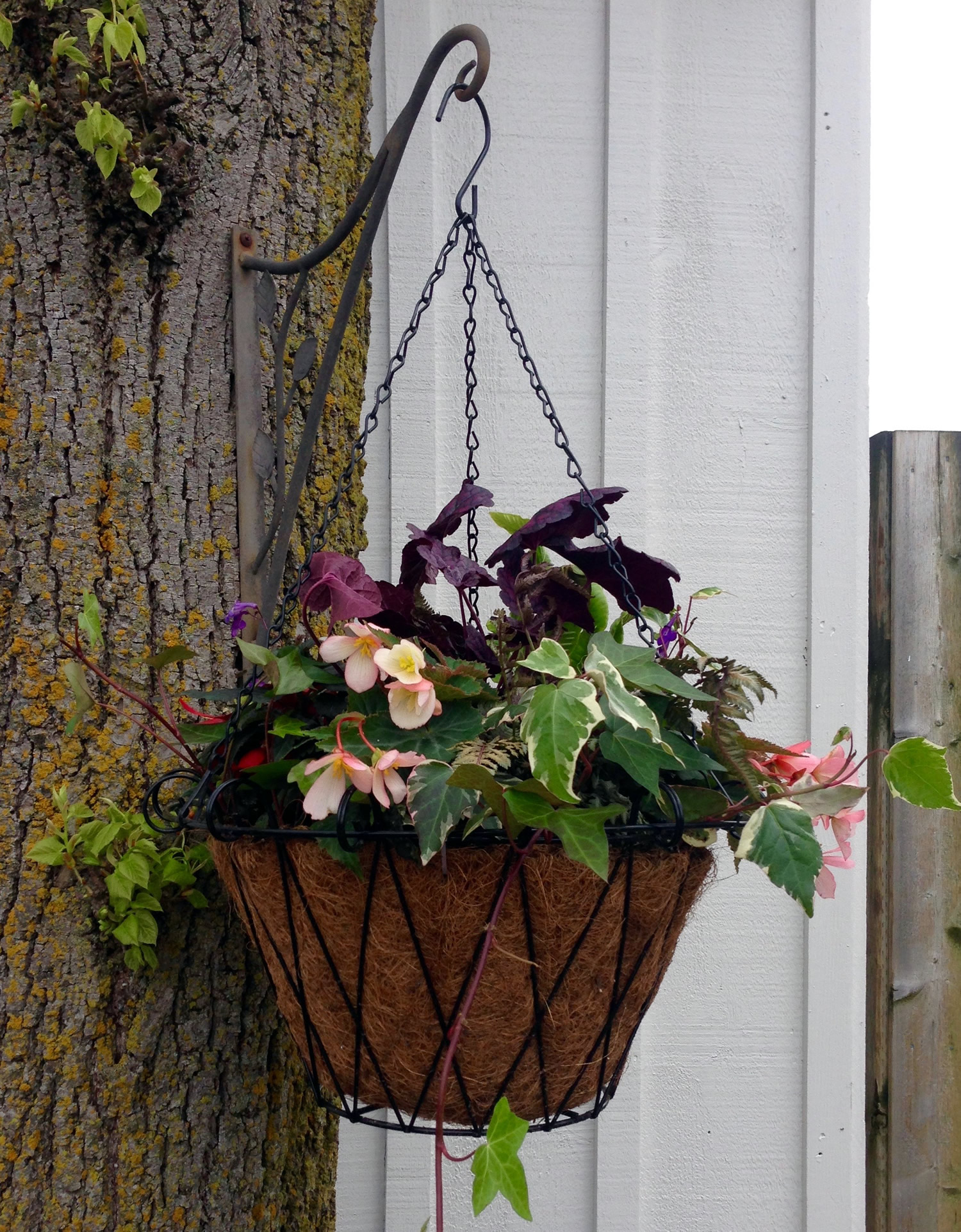 Hanging Basket for the Shade