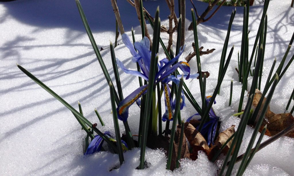 snow with blooming flowers