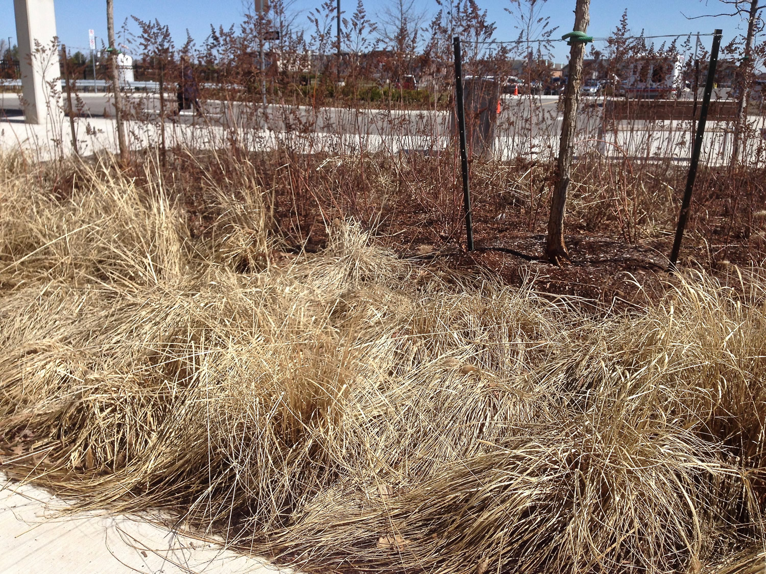 Spring Cleanup of Perennial Grass Beds Before